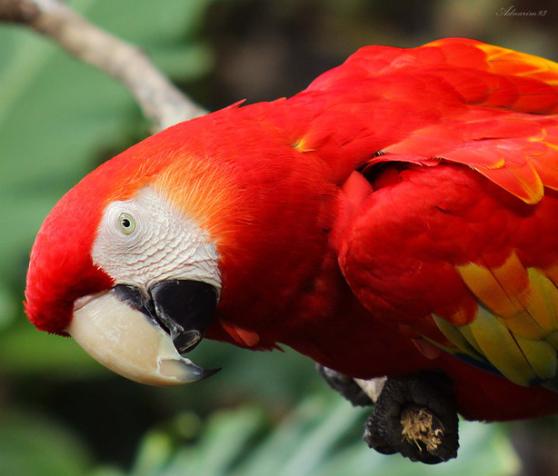 Macaw 2.jpg