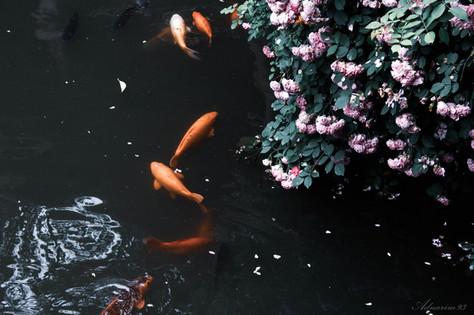 YuYuan Gardens 23