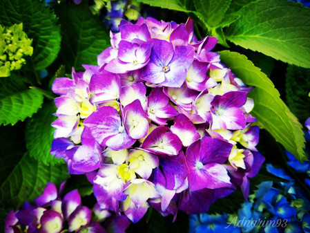 Purple Flowers, Jing 'An, Shanghai, China