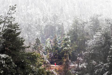 Zhangjiajie National Forest Park_ Red