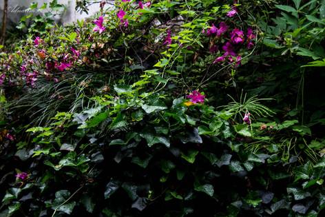 YuYuan Gardens 20