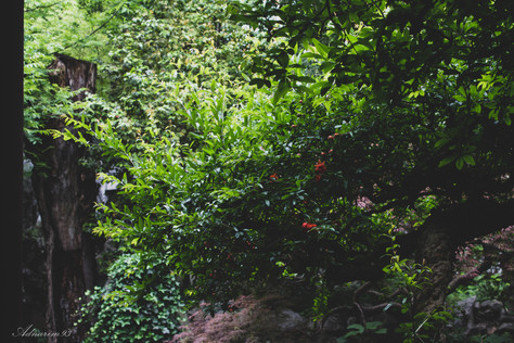 YuYuan Gardens 14