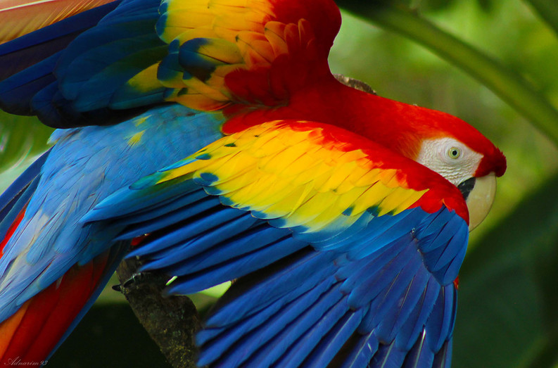 Macaw 1.jpg