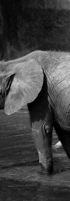 Baby Elephant 14.jpg