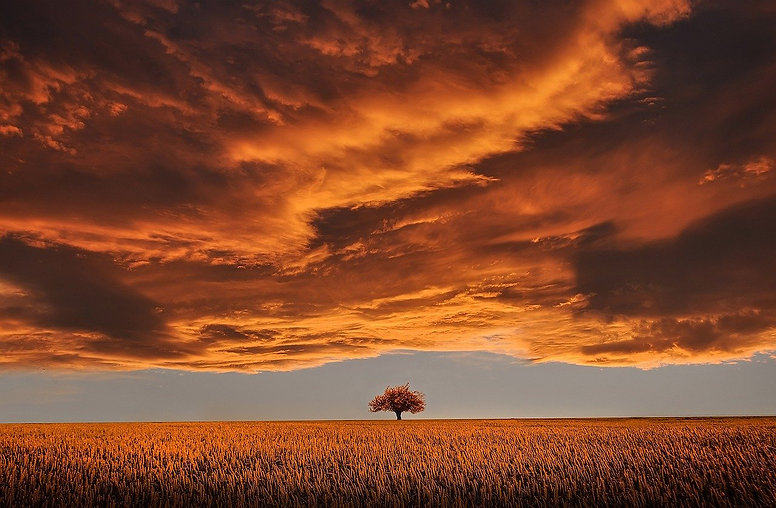tree-736875_1280.jpg