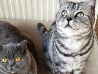 Cat buddies!