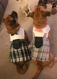 dogs in kilts.jpg