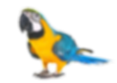 parrot_edited_edited_edited.png