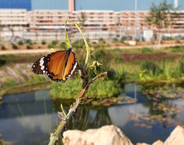 Novedad: se inaugurara el primer Parque de Mariposas de Israel