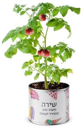 """""""Ahava Ktana""""  Qué elegirás para regalar ?: semillas de amor, alegría o salud?"""