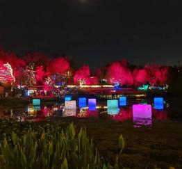 Winter Lights  fiesta de luces, naturaleza y comida -Jardín Botánico de Jerusalén mes de Diciembre