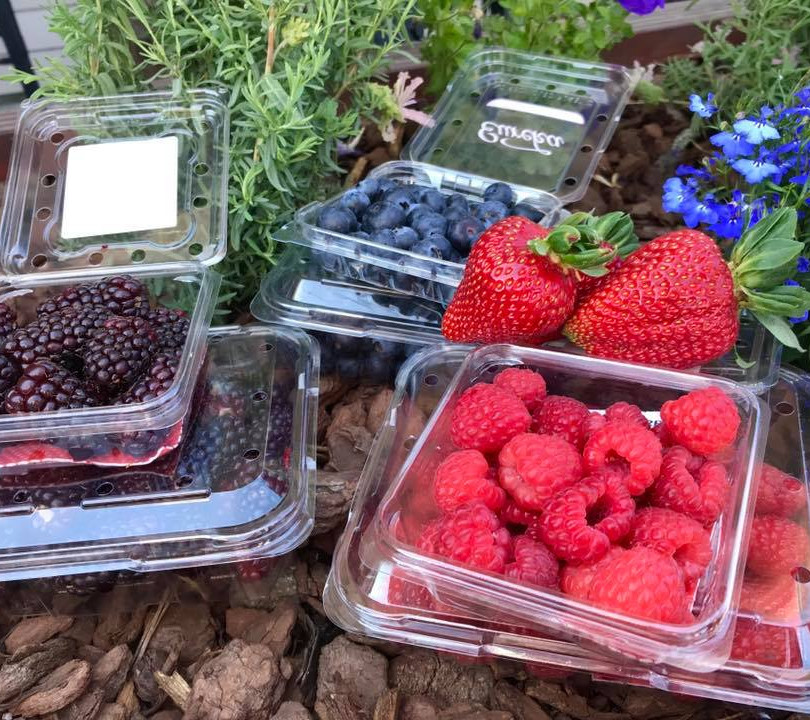 All Berries.jpg