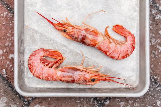 Argentinian Red Shrimp