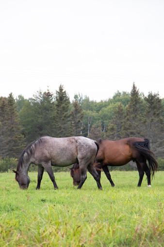 Horses Aug. 2020.jpg