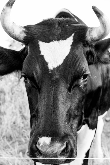 Cows & Cats Aug 2019-15.jpg