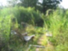 overgrownweeds.jpg
