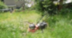 Overgrown.Pre Lanscaping.jpg