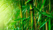 benefits-of-bamboo-fibre-ortohispania3.j
