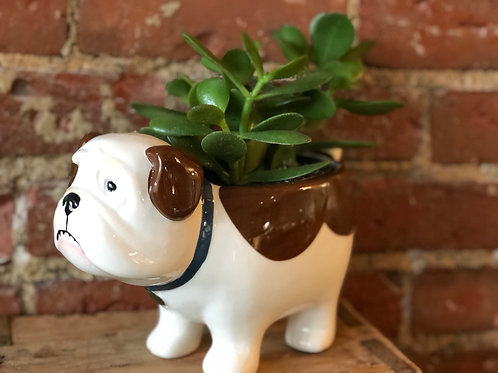 Dog planters