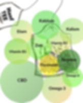 Hanftee-Inhaltsstoffe-Infografik.jpg