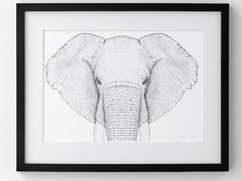 Ethan the Elephant - Full Face