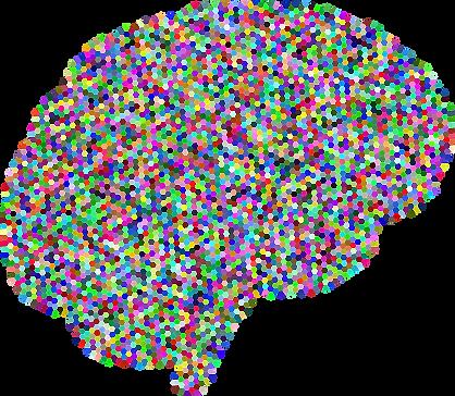 brain-3223582_1280.png