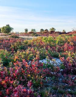 Landa carsica in autunno