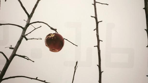 FUKUSHIMA APPLE TREE