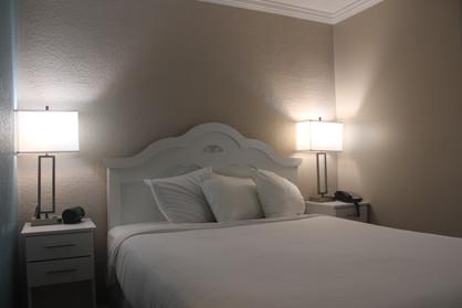 Pet-Friendly Hotel Room