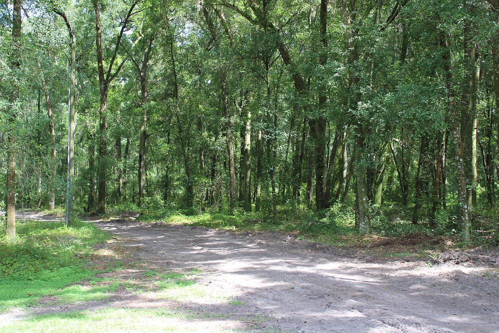 Ocala Trail