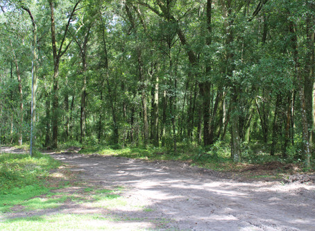 How Does Hiking in Ocala Compare with Other Places?