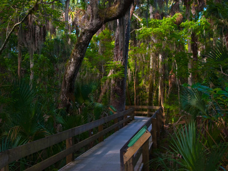 Outdoor Activities in Melbourne, FL: Erna Nixon Park