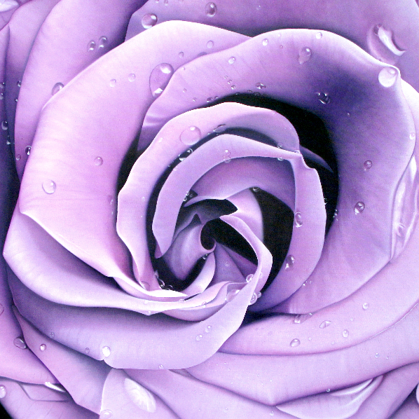 Lavender-Rose_square_edited.jpg
