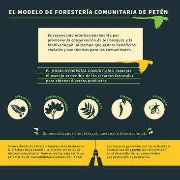 Arte portada de bosques para la vida y la paz