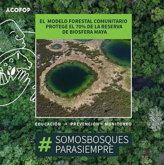 Modelo forestal comunitario