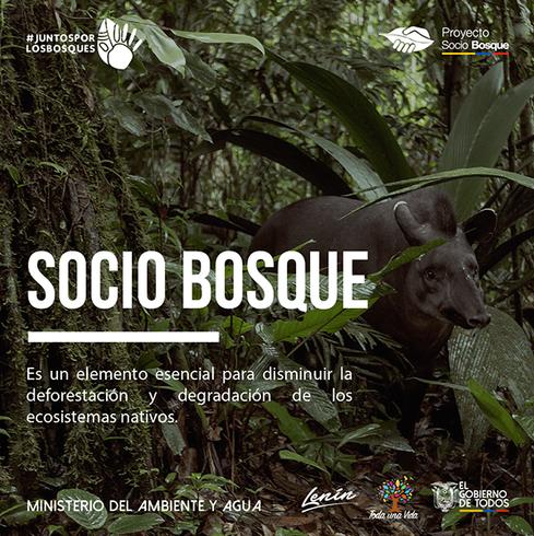 Arte campaña socio bosque