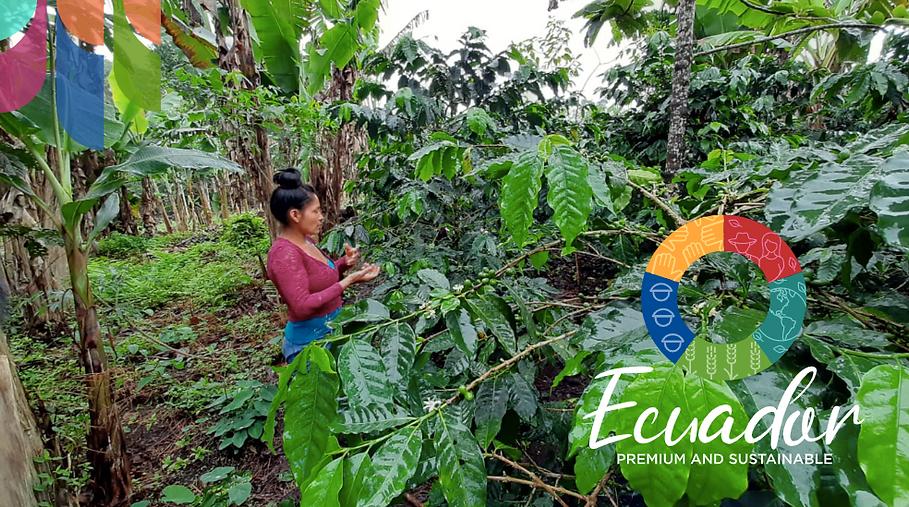 Portada documento de narrativa de Ecuador premiun sustainable