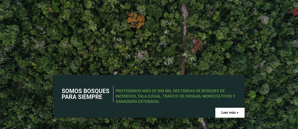 Foto aérea de bosque tropical