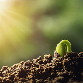 planta-brotar-crescendo.jpg