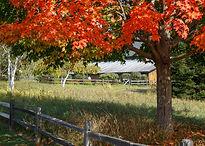 Zoppo Vermont-2189.jpg