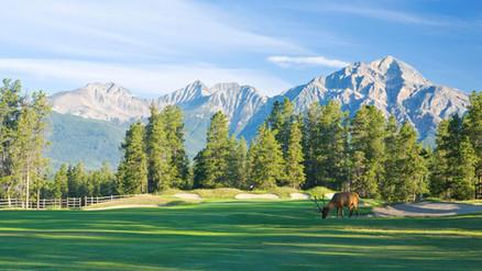 Elk_on_Golf_Course_518757_high.jpg
