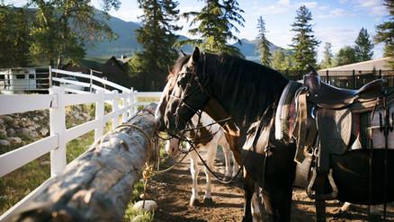 Horseback_Riding_500020_med.jpg