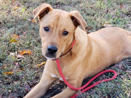 Max- Adopted