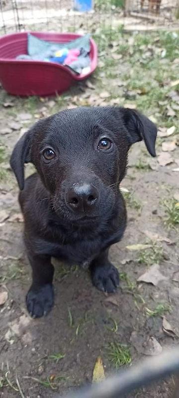 Nobody. Dackel Labrador Mischling