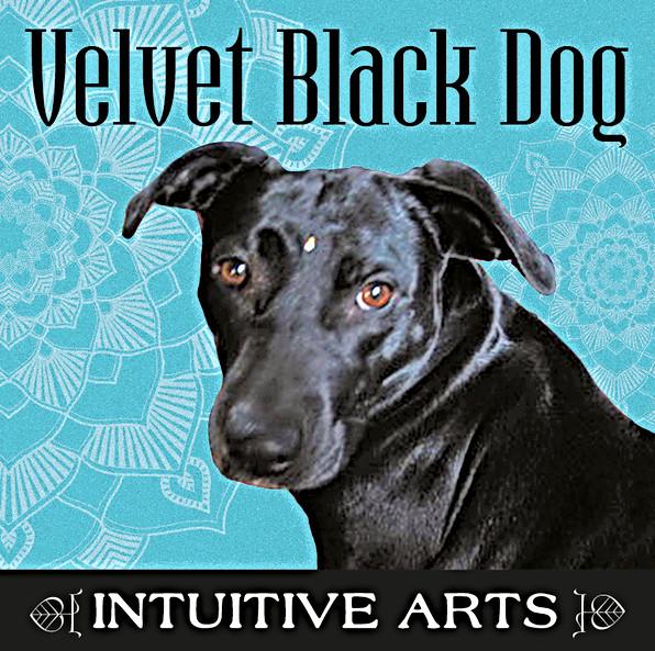 Velvet Black Dog Logo