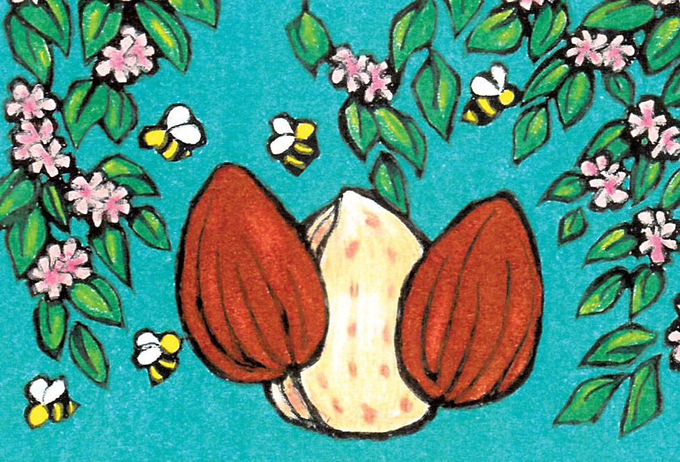 Almond Butter Illustration