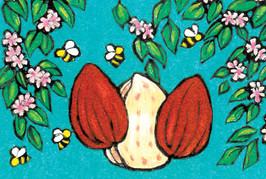 Packaging illustration for Almond Butter