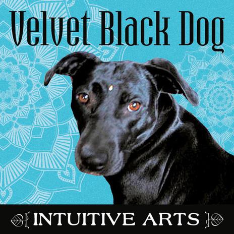 Velvet Black Dog