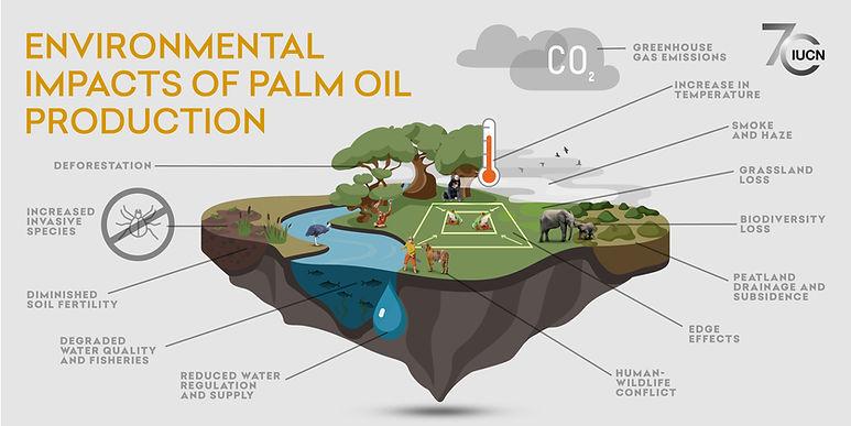Palm Oil_Sec 4_FINAL.jpg