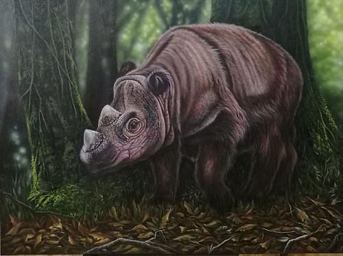 Sumatran Rhino (2).jpg